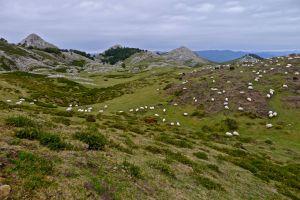 dando-un-paseo-ayer-por-la-sierra-de-aralar-navarra1