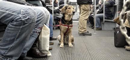 Perro-Metro-Madrid