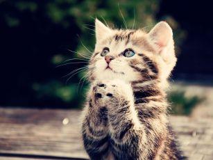 Imagenes-de-gatitos-rezando[1]